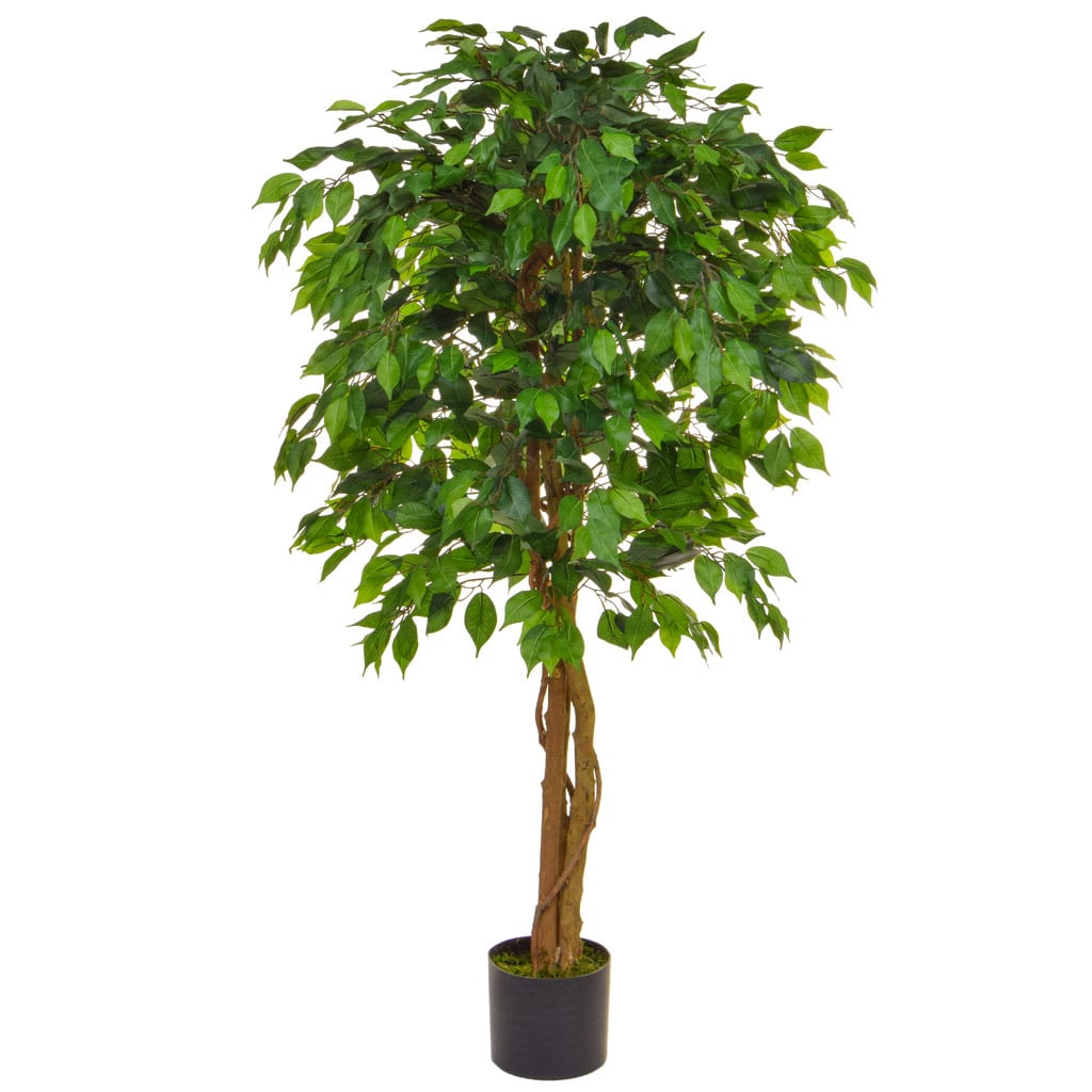 NTT Ficus Contract Green 150cm