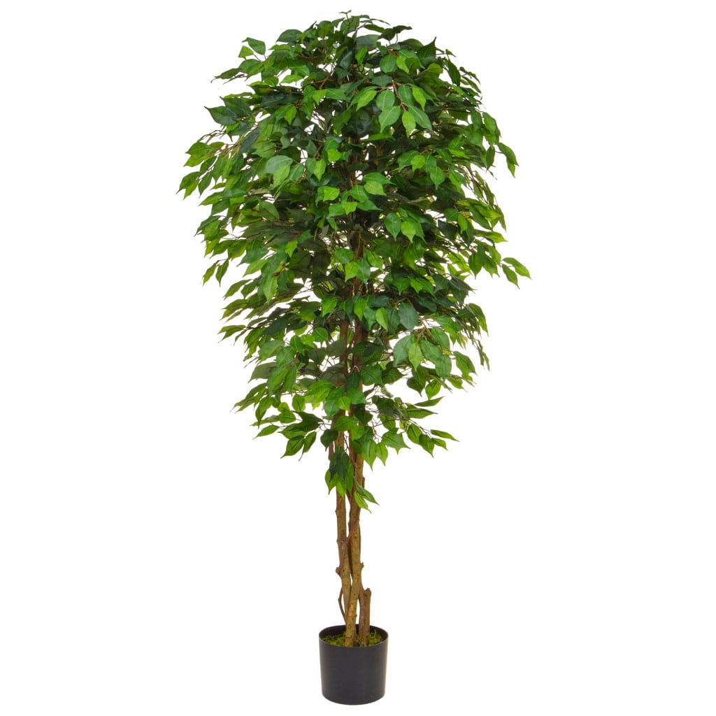 NTT Ficus Contract Green 180cm