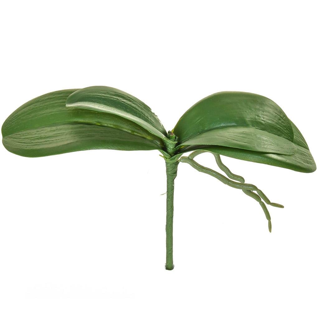 SF Leaf Orchid XJ Phal Small 9cm