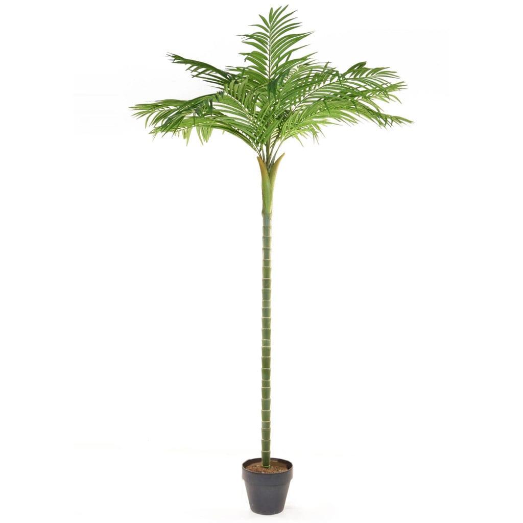 Palm Areca single stem YF 270cm
