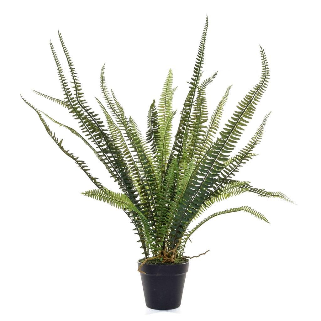 Plants Fern In Pot YF 54cm