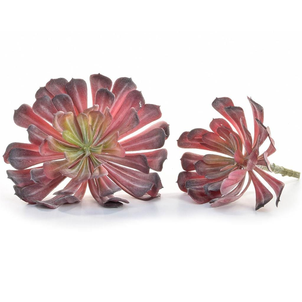 Plants Succulent Red YF 17x19cm
