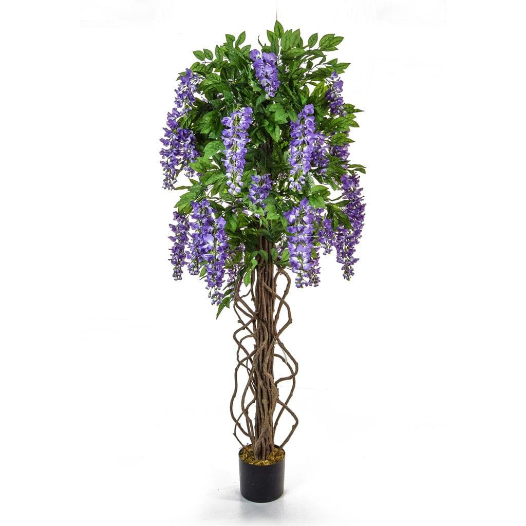 NTT Flowering Wisteria Purple BA 160cm
