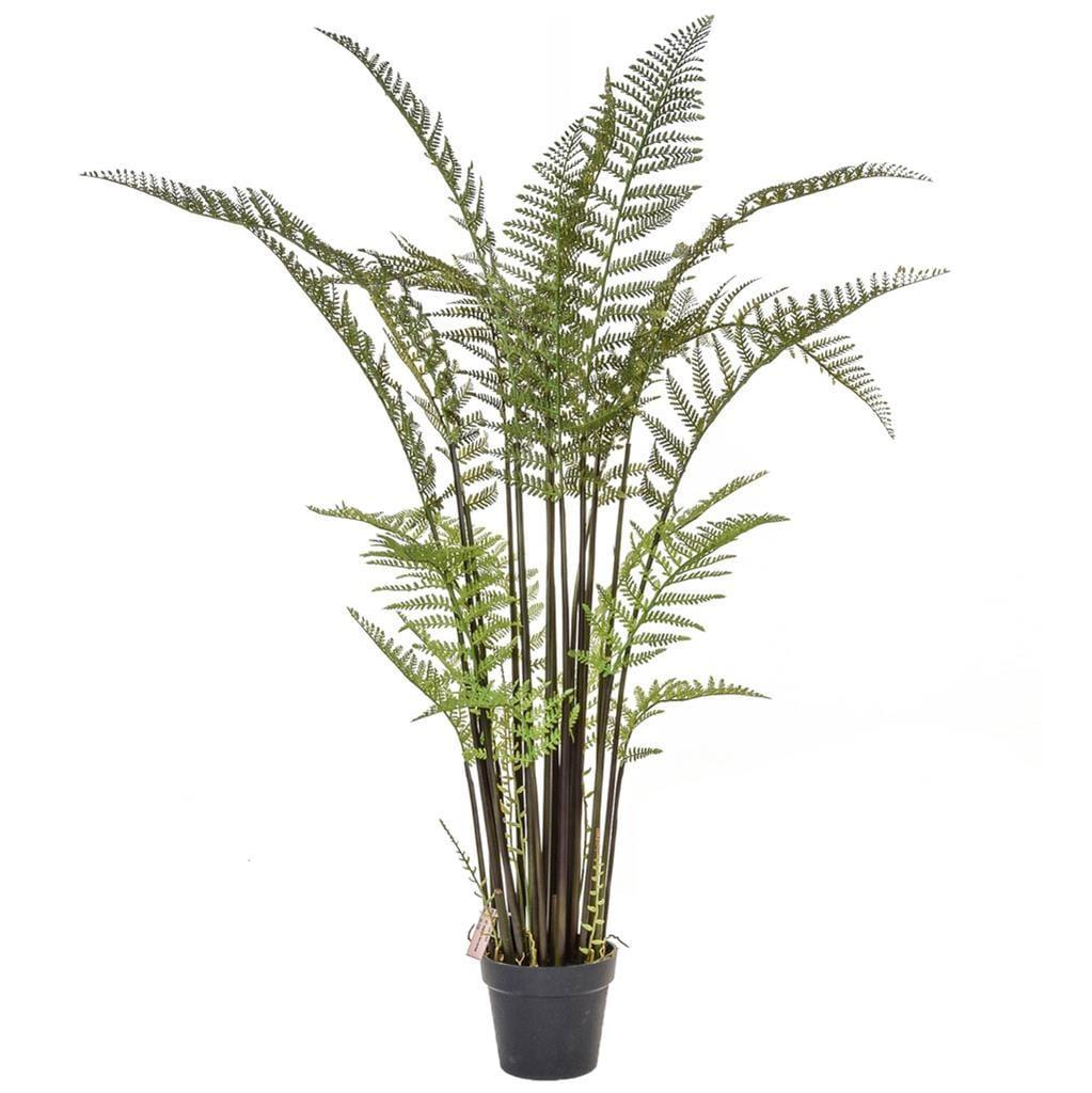 Plants Tall Fern YF 155cm