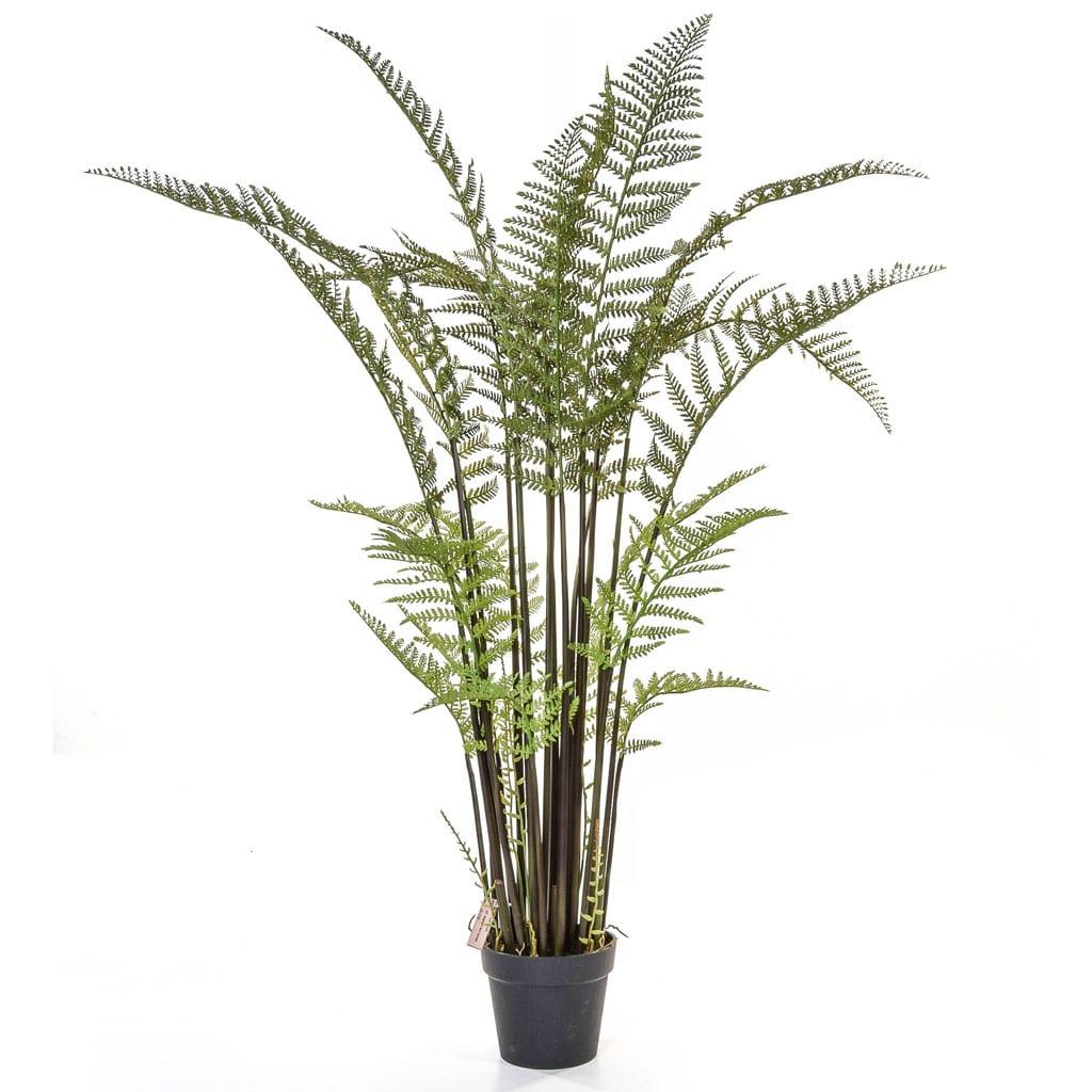 Plants Tall Fern YF 115cm