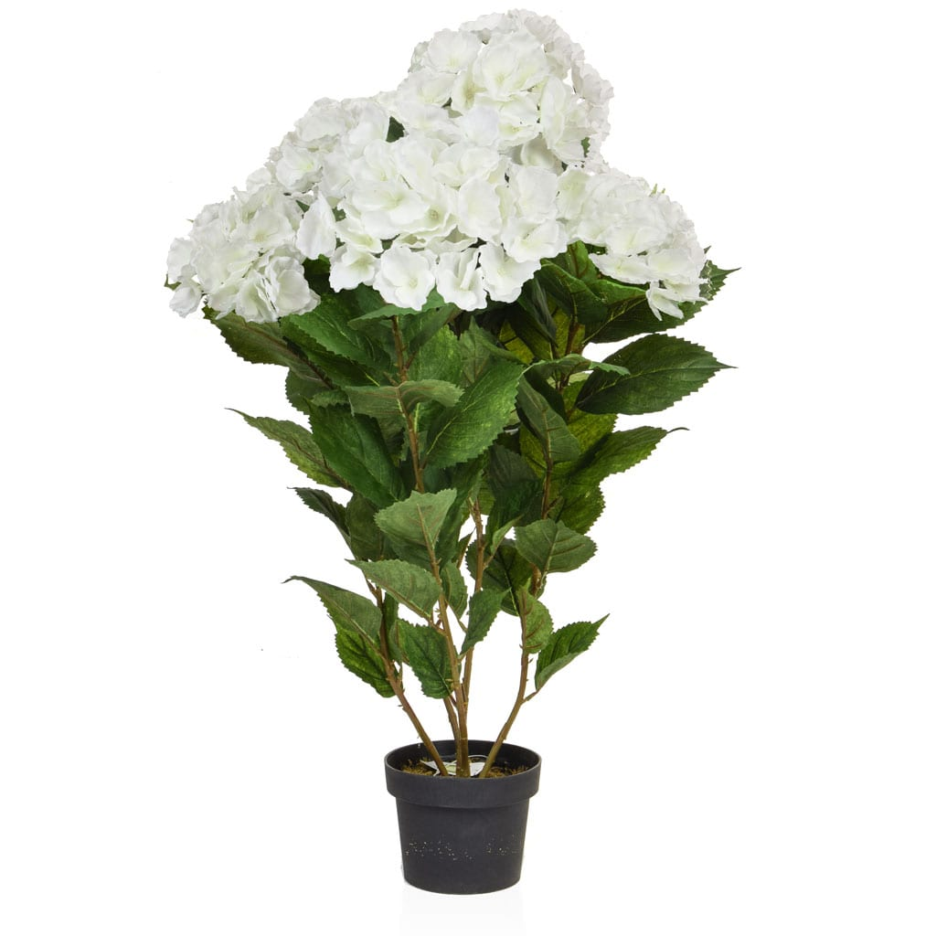 Plants Flowering Hydrangea White GS 82cm