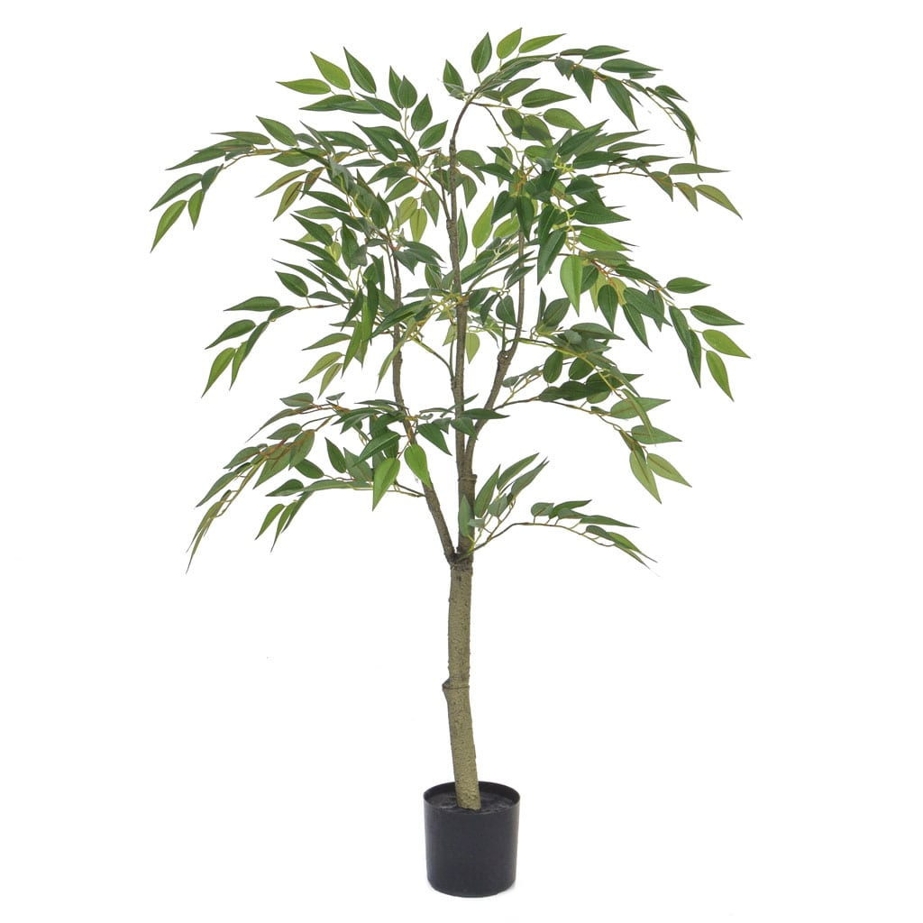NTT Ficus Benjamin FY 120cm