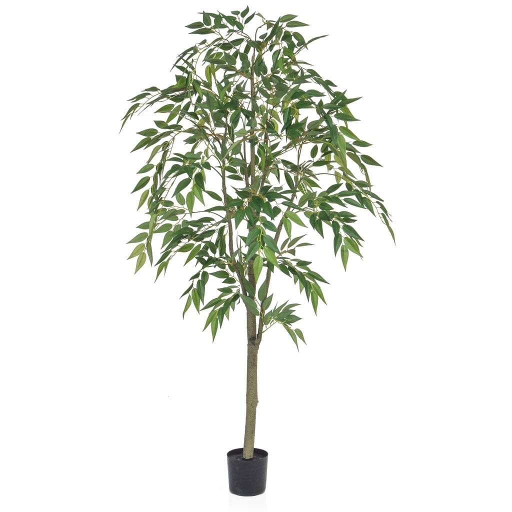 NTT Ficus Benjamin FY 150cm