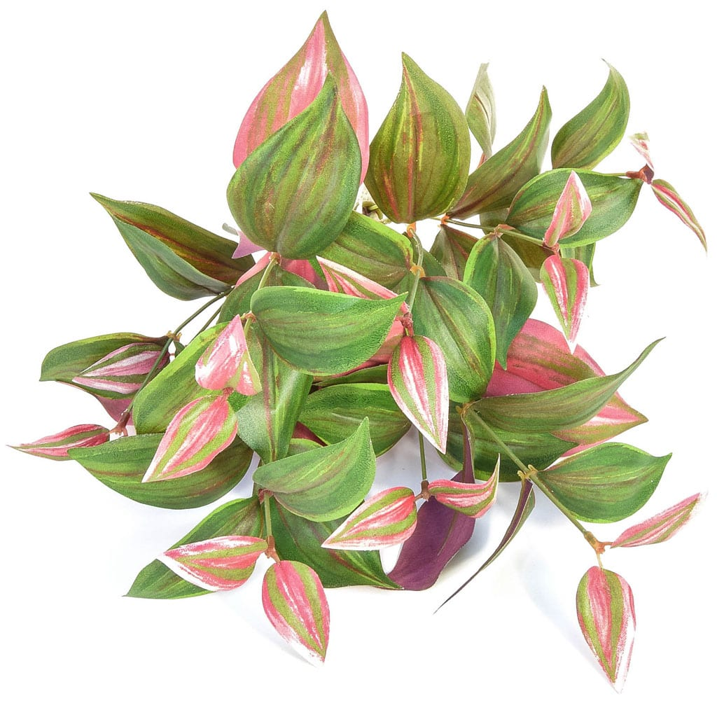 Plants Tradescantia FY 35cm