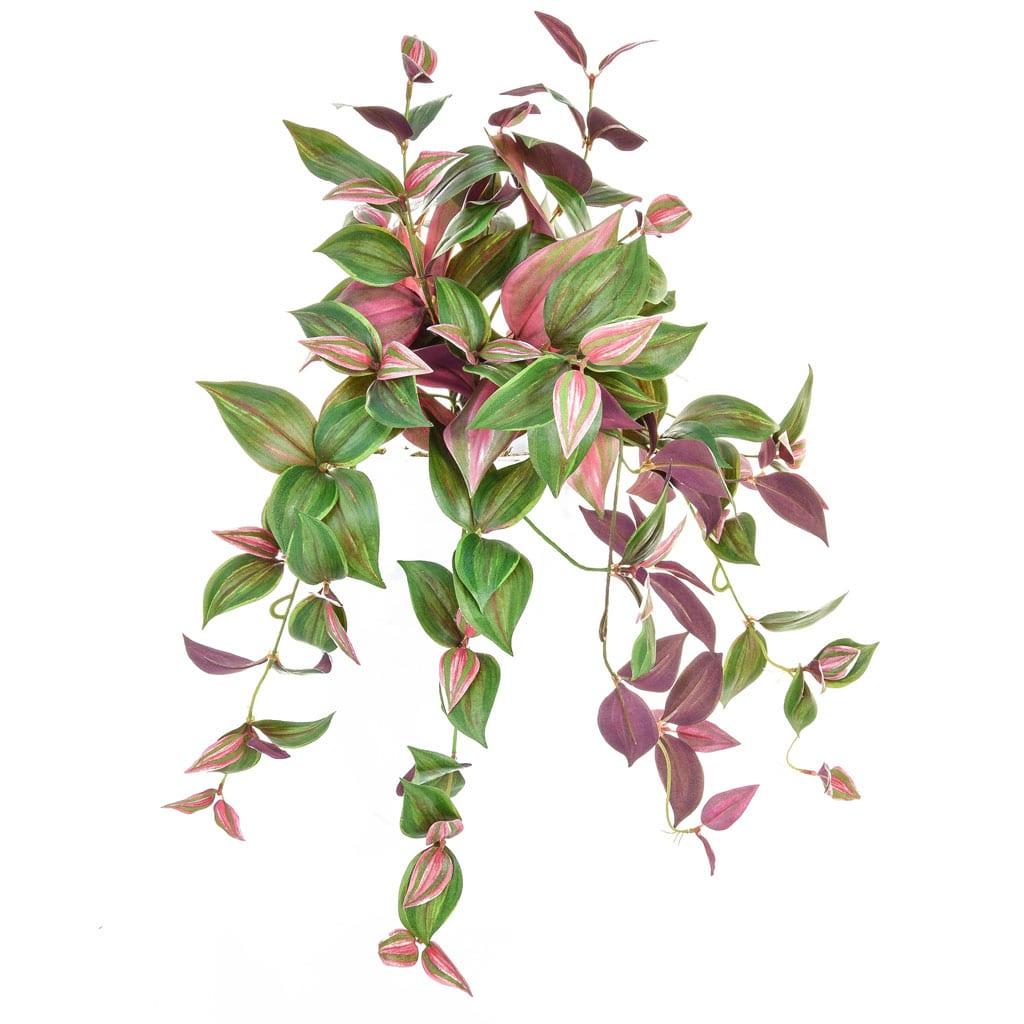 Plants Tradescantia FY 50cm