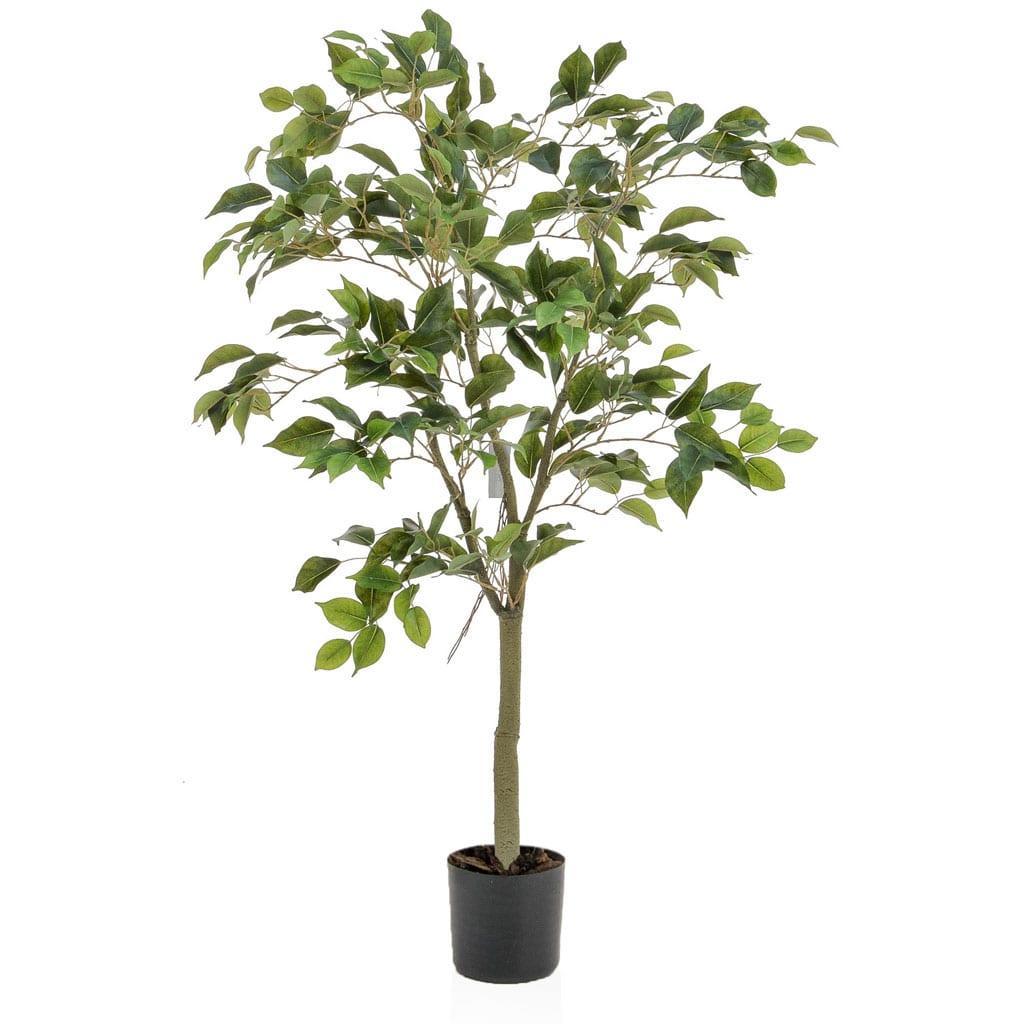 NTT Ficus FY 120cm