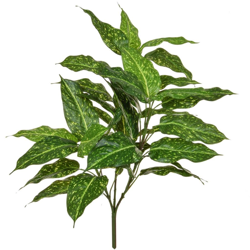 Plants Acuba YF 85cm