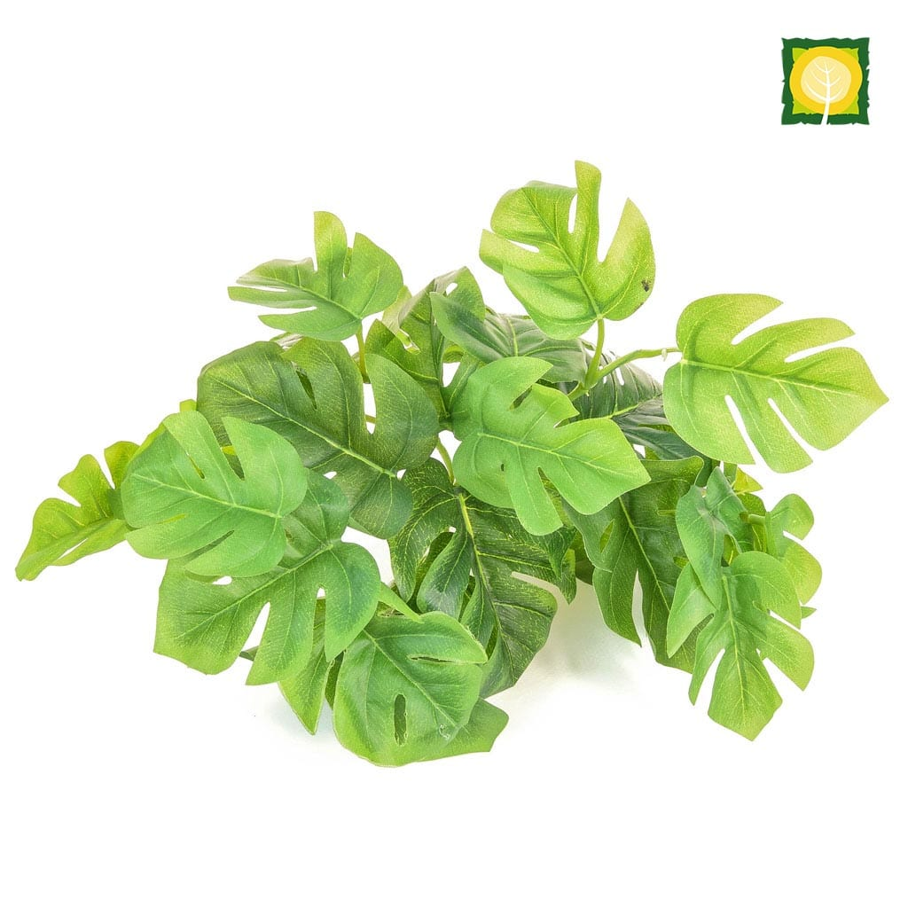 Plants GW Monstera 25cm UV