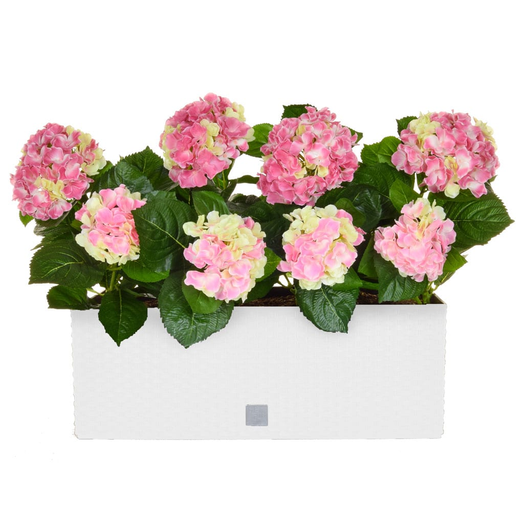AN-Rato Trough Hydrangea Pink White 50cm
