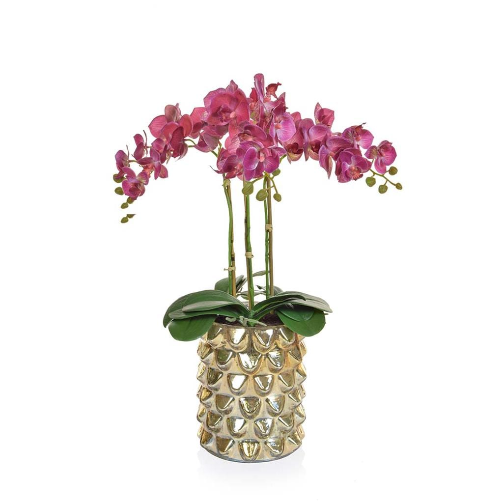 AN-Dk Pink Orchids XJ in Gld Glass Vase 50cm