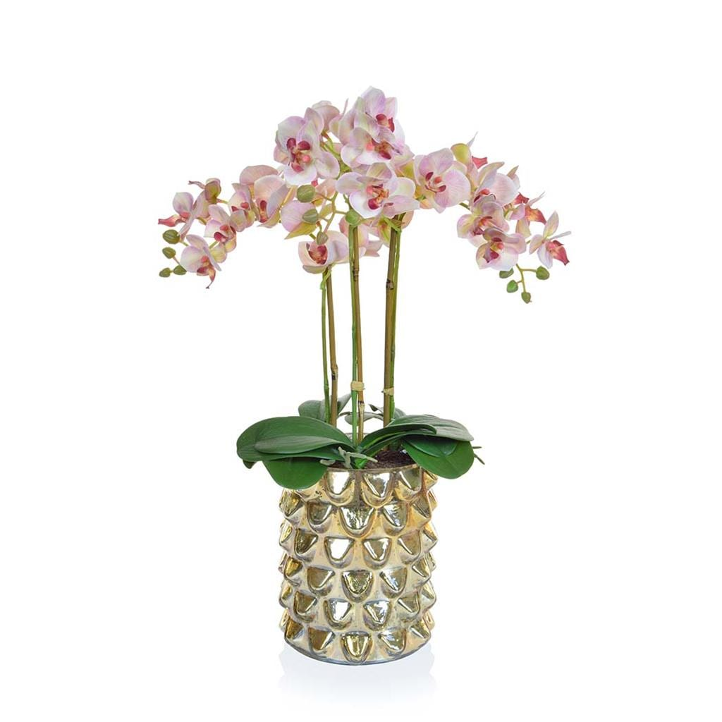 AN-Lt Pk Orchids XJ in Gld Glass Vase 50cm