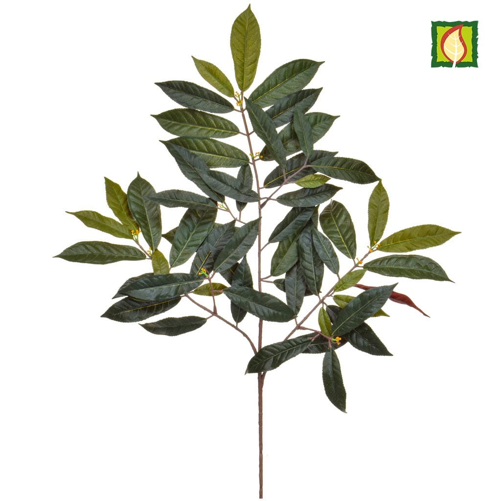 Foliage Capensia Nice Green Red 60cm FR