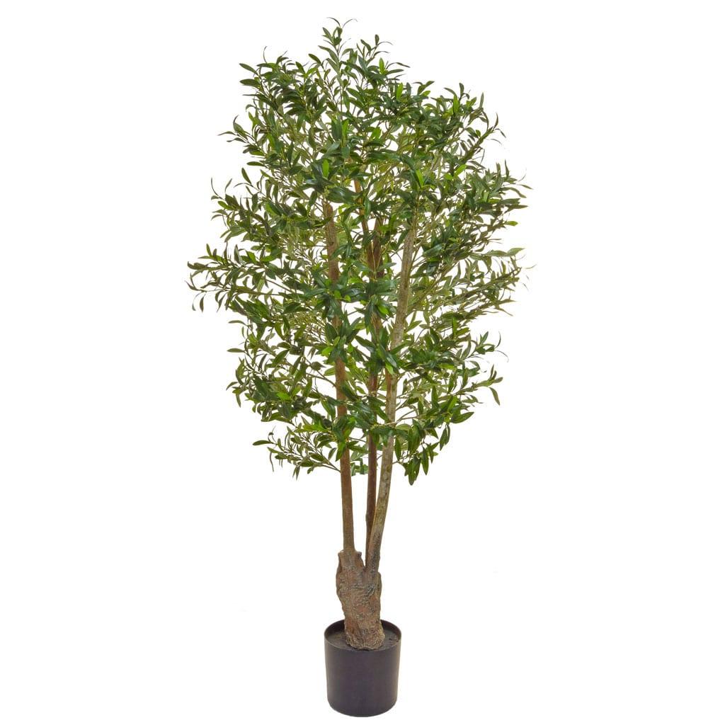 NTT Olive Green 160cm BA