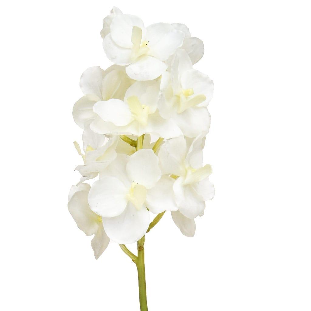 SF Orchid Vanda K White 53cm